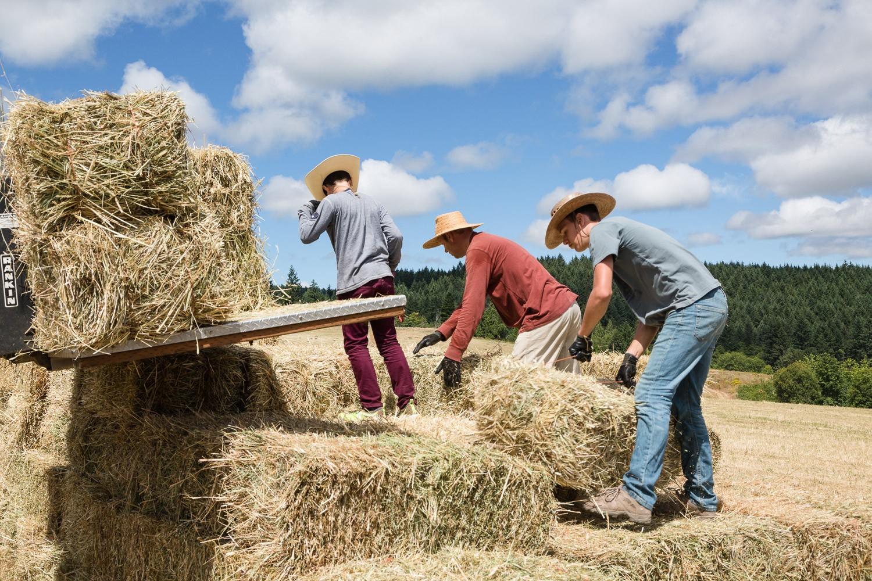 Harvesting hay on Three Feathers Estate, Chehalem Mountain AVA, Oregon, USA.