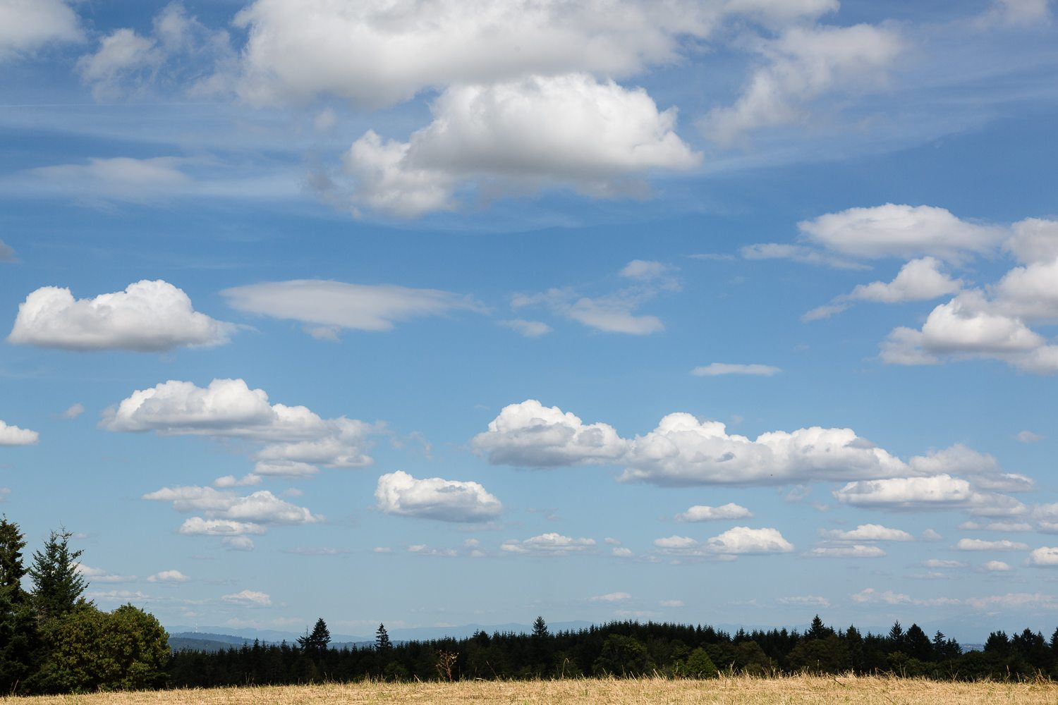 Light clouds and blue sky over hayfields on Three Feathers Estate, Chehalem Mountain AVA, Oregon, USA.