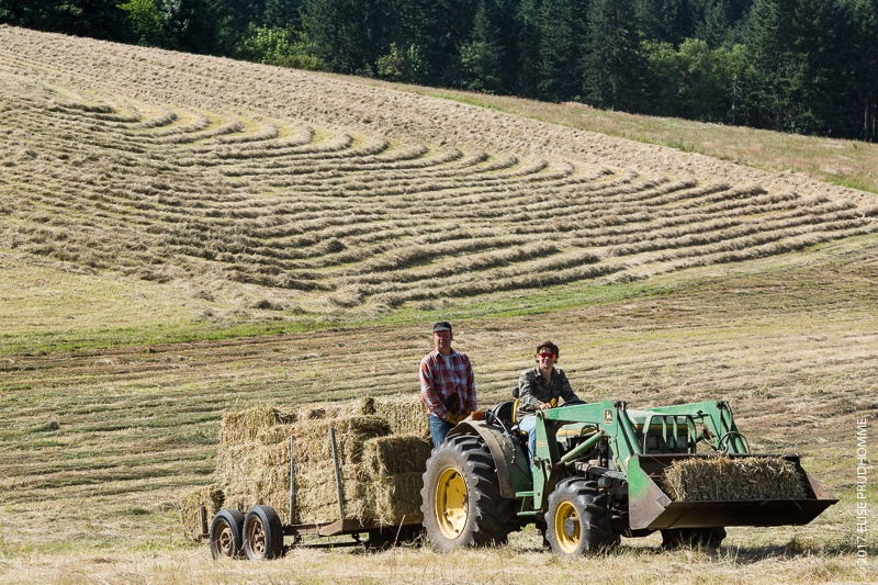 French haymaking team bringing bales to the barn on Three Feathers Estate & Vineyard