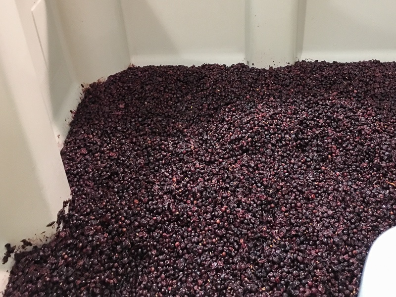 Three Feathers 2017 Pinot Noir grapes nestle in vats at Lady Hill Winery.