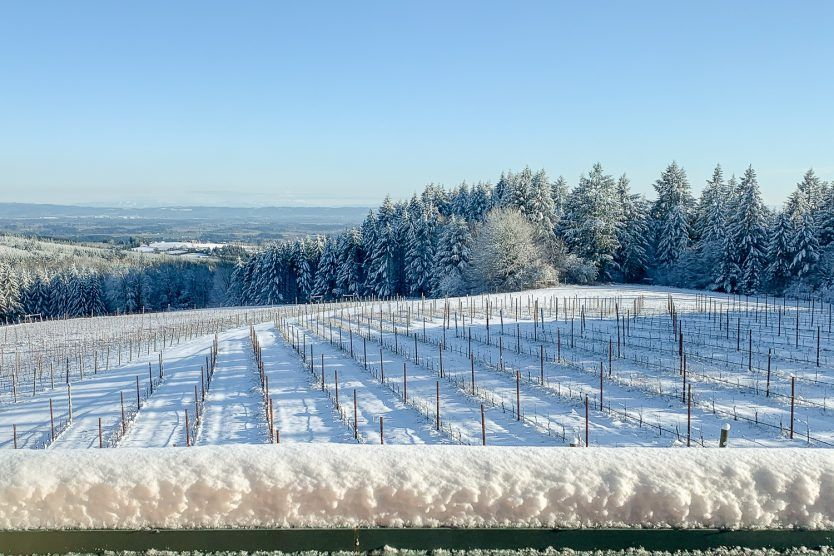 Overview of snow-covered Torio Vineyard on Chehalem Mountain, Willamette Valley, Oregon.