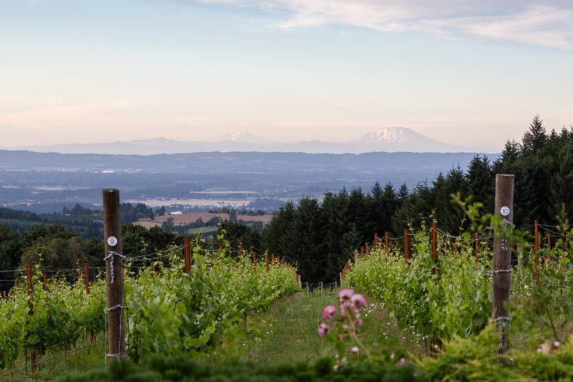 Early morning looking out over Torio Vineyard and Mount Saint Helens