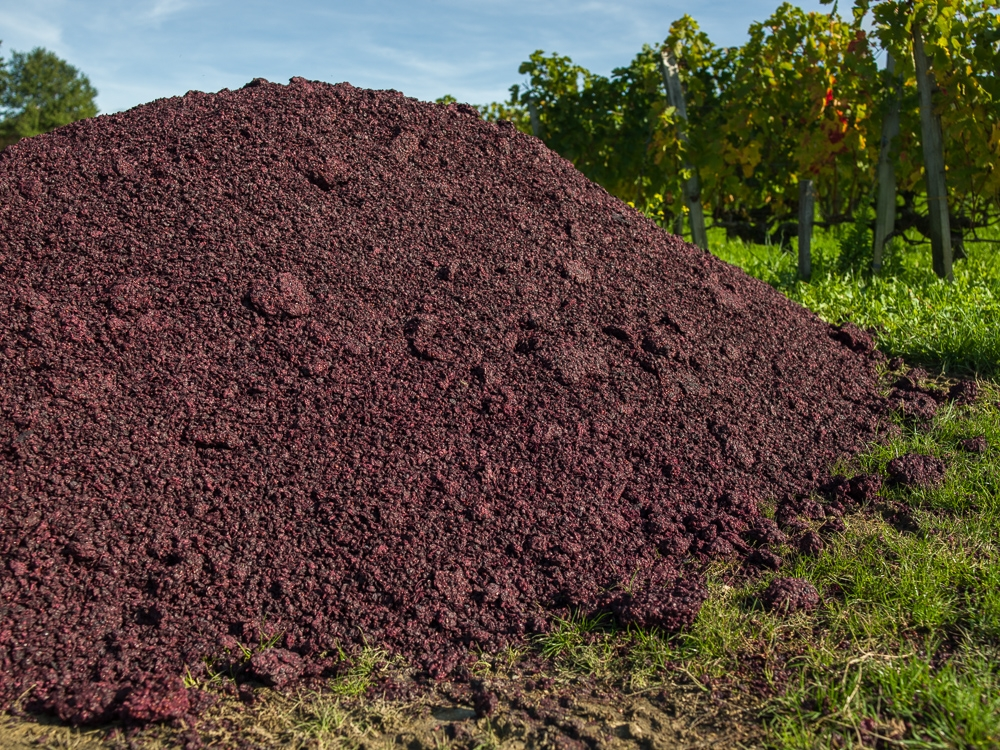 Remains of crushed grapes after wine production