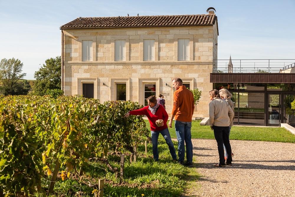 Discussing the vines at Château Pavie Macquin, St Émilion Giro