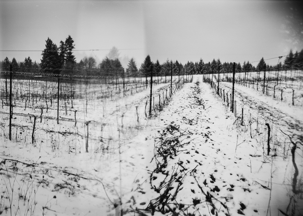 Snow covered ground after pruning at Three Feathers 2019