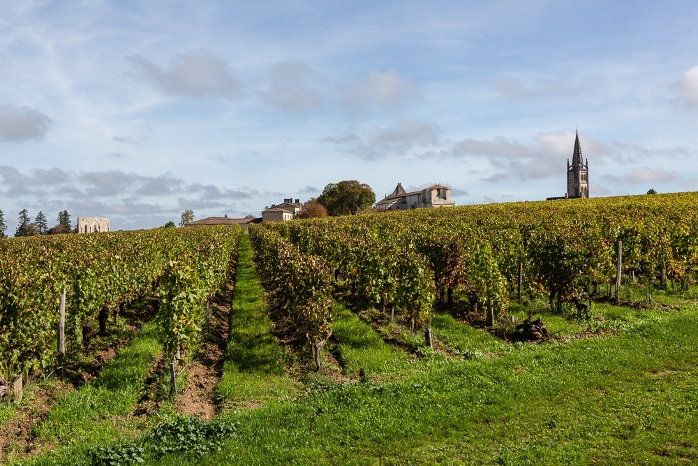 Vineyards in the Bordeaux wine region of St Emilion, Gironde, Fr