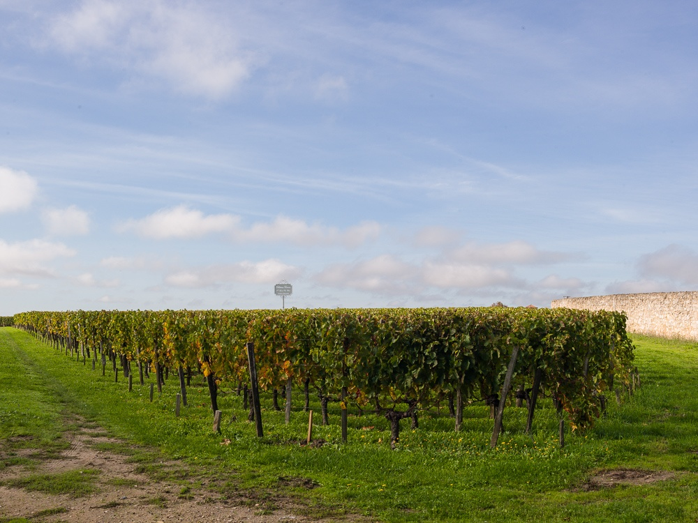 Vineyards of Chateau Canon 1er Grand Cru Classe, St Emilion in t