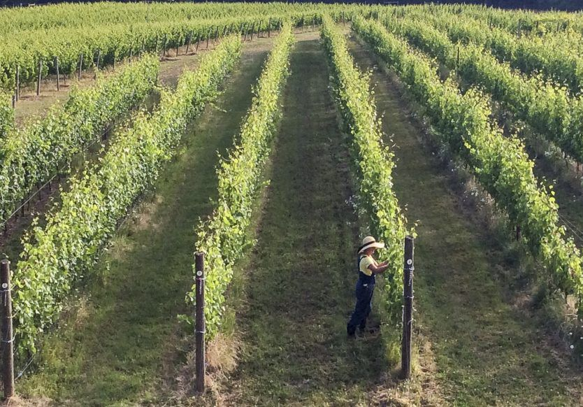 Christine Stimac working in Torio Vineyard on Three Feathers Estate