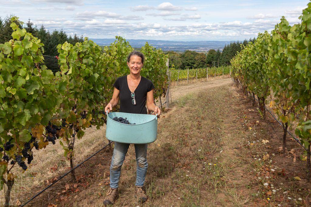 Elise Prudhomme harvesting Pinot Noir Précoce at Torio Vineyard