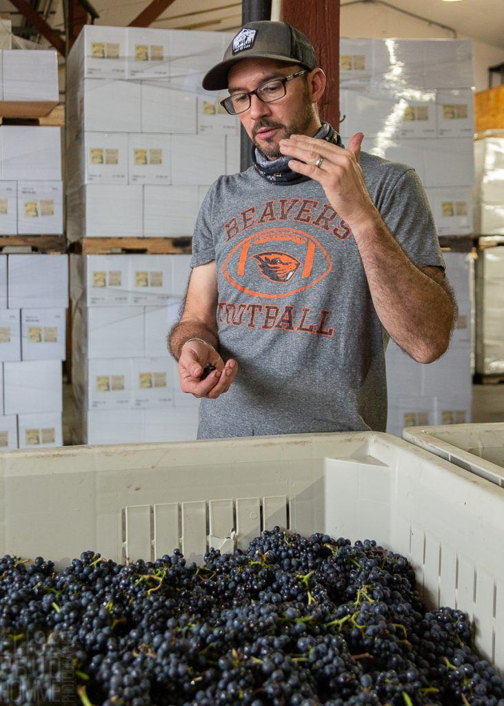 Going Whole Cluster, decision making with winemaker Dan Duryee