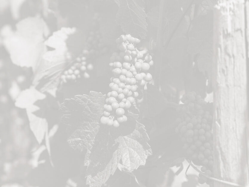 three-feathers-pommard-grapes-before-veraison-torio-vineyard-photo-elise-prudhomme